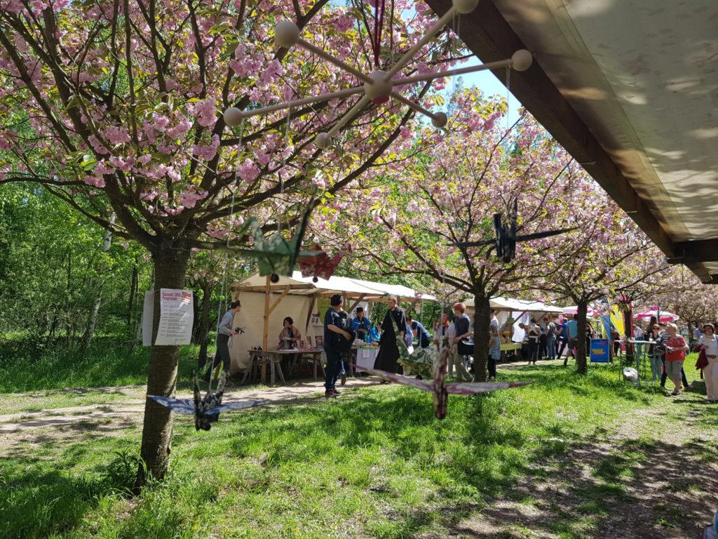 4 wunderschöne Orte für die Kirschblüte in Deutschland